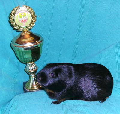 Mexikanischer Moppel-Champ